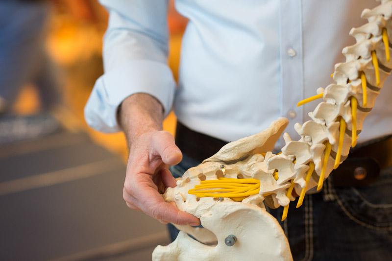 Chiropraktik-Seminare Campus Hamburg