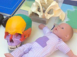 Kinder-Chiropraktik Seminar bei Chiropraktik Campus